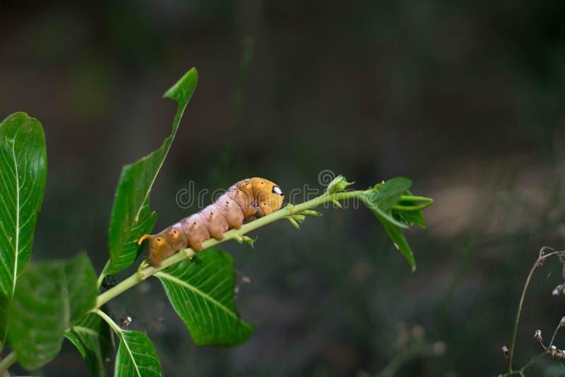 Bladworm royalty-vrije stock foto's