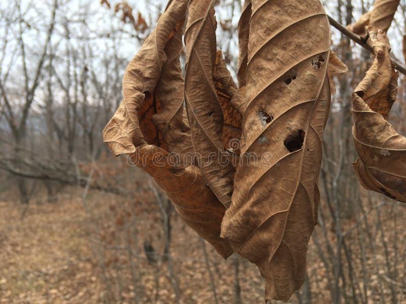 Blady liść, zakończenie Las, drzewa, jesień sezon zdjęcie royalty free