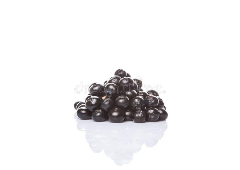 Blaeberry eller blåbär XII royaltyfria foton