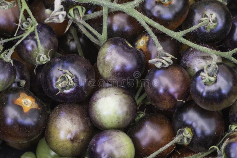 Blak cherry tomatoes on the vine stock photo