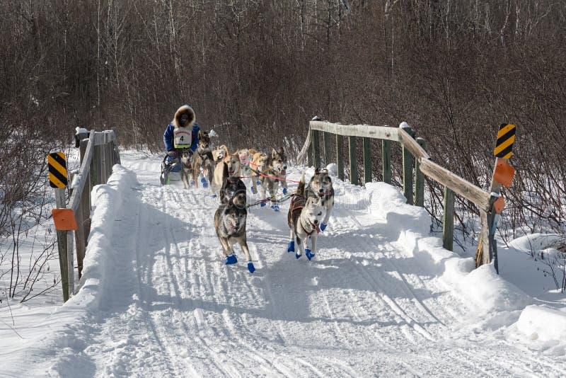 Blake Freking Normanna Road Bridge. DULUTH, MN - JANUARY 27, 2019: Blake Freking's team crosses bridge during the John Beargrease Sled Dog Marathon royalty free stock photography