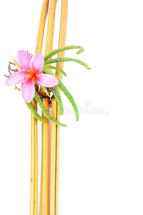 Blanc Backround de Vera And Yellow Bamboo With d'aloès photographie stock