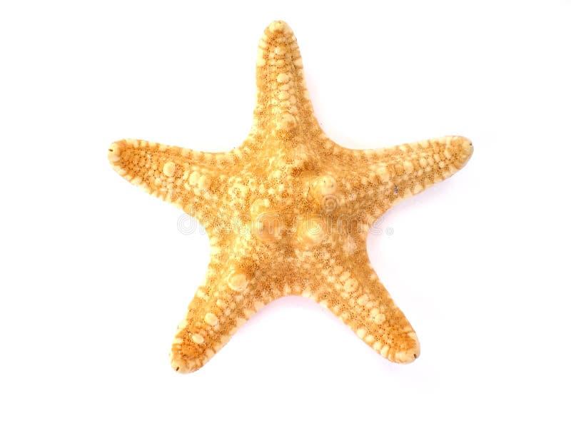 blanc d'étoiles de mer d'isolement par fond image libre de droits
