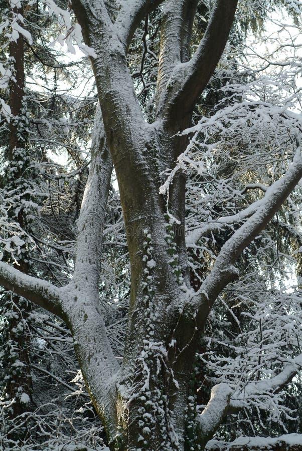 Blanc d'arbre de neige photos libres de droits