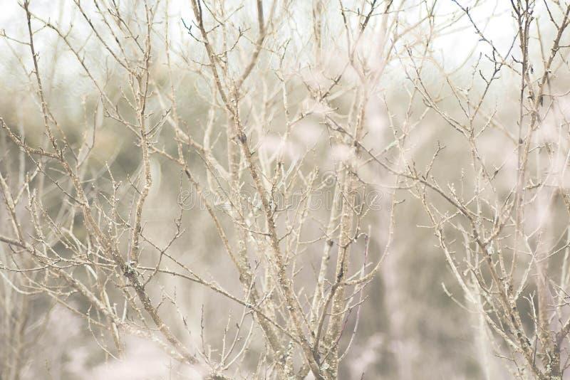 blanc d'arbre de source d'isolement par fond photos libres de droits