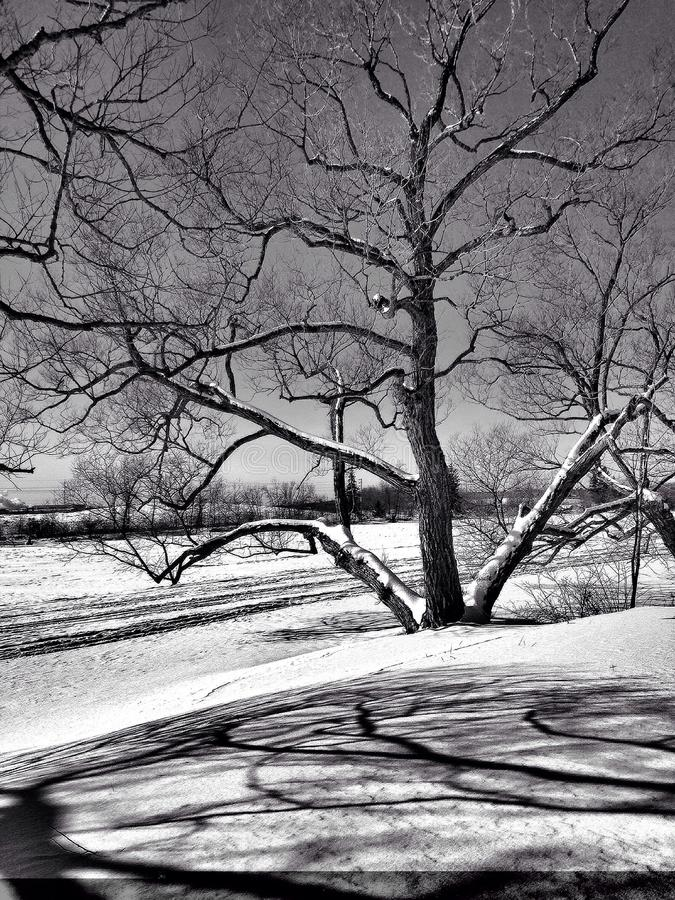 Blanc d'hiver photos stock