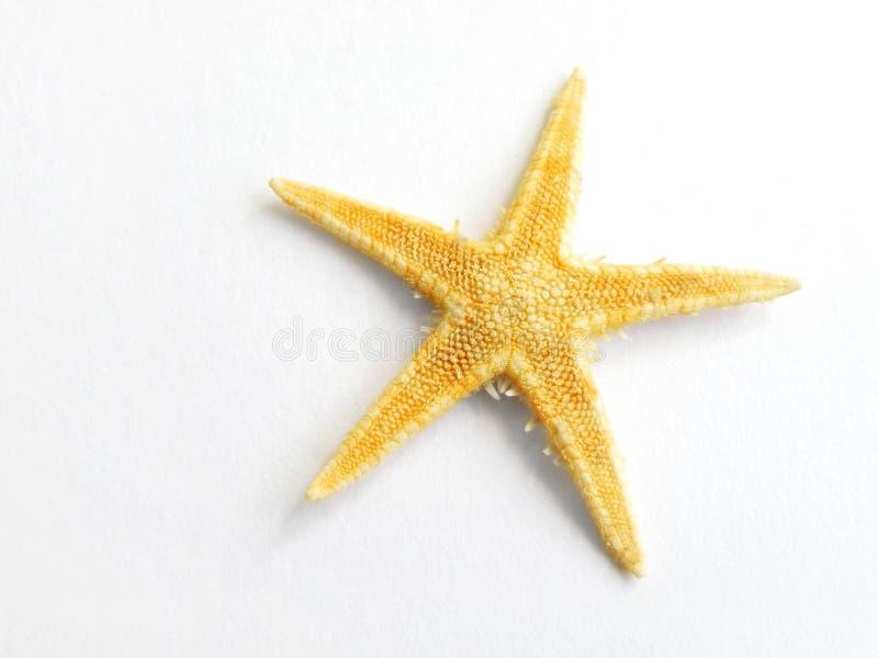 blanc d'isolement d'étoiles de mer d'étoile de mer image libre de droits