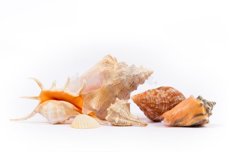 blanc d'isolement de seashell photographie stock