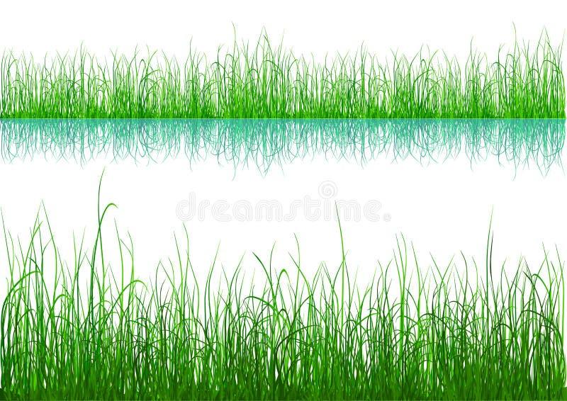 blanc d'isolement de vert d'herbe illustration de vecteur