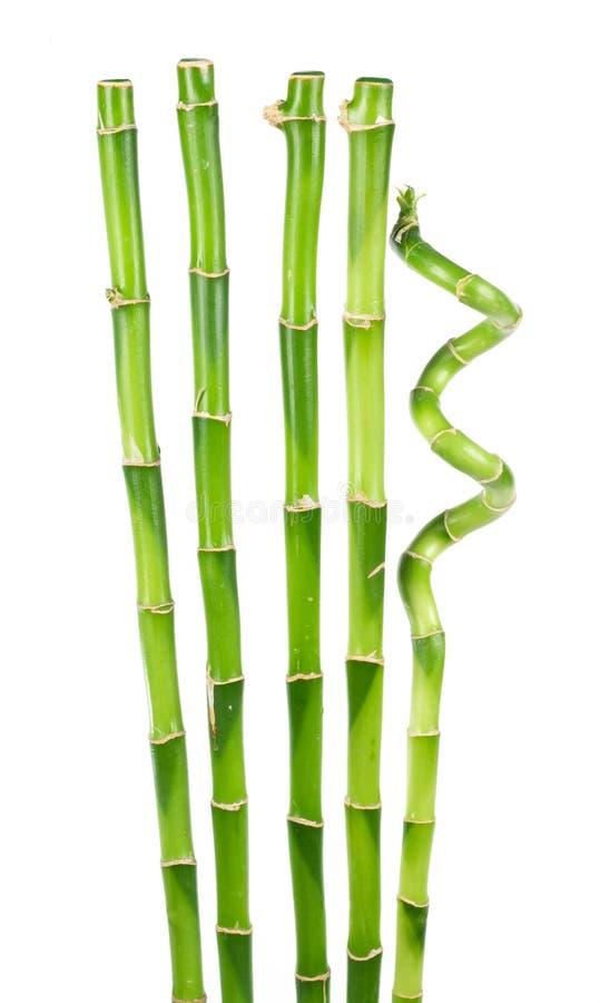 blanc d'isolement par bambou photographie stock