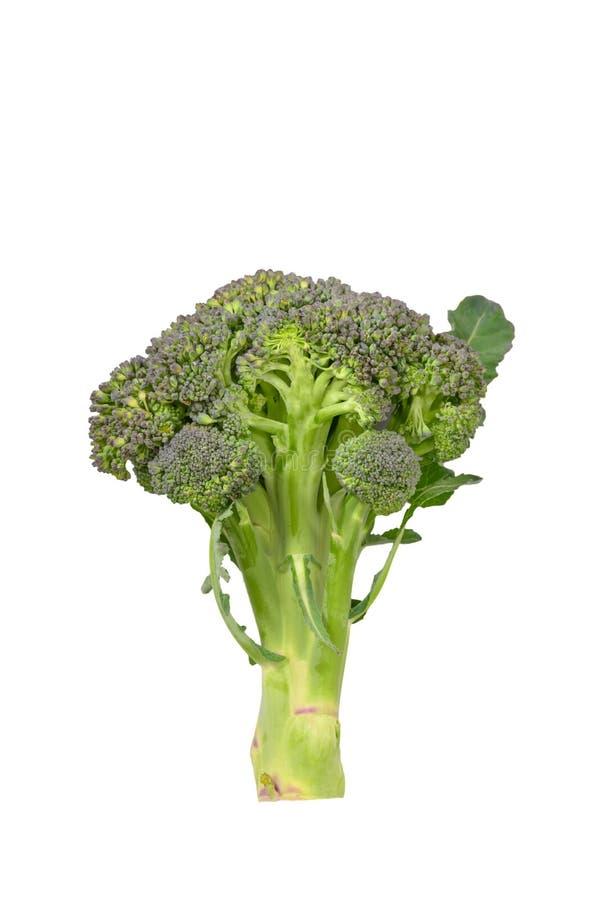 blanc d'isolement par broccoli de fond image libre de droits