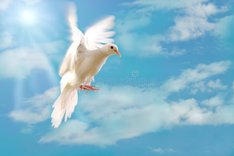 blanc d'isolement par vol bleu de colombe photo stock