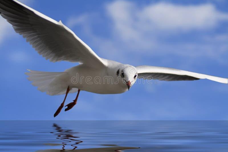 blanc d'oiseau illustration stock