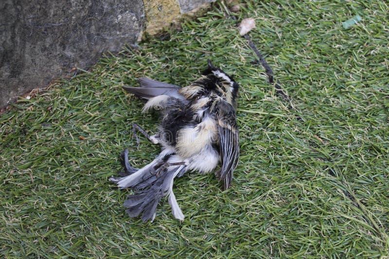 Blanc d'oiseau de la mort et noir jaunes image libre de droits