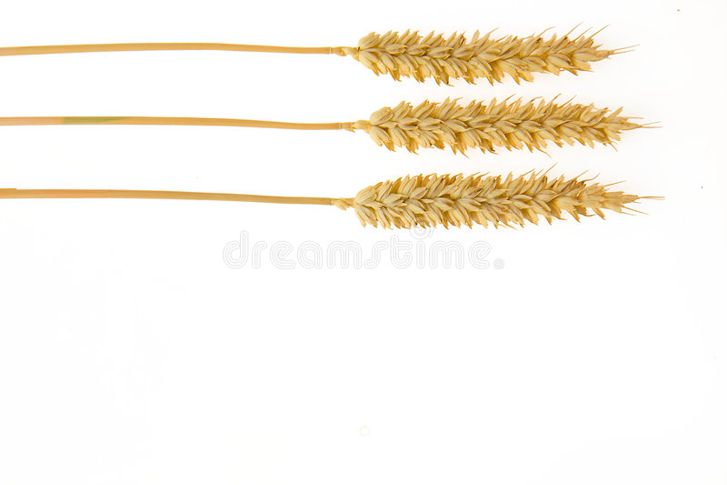 blanc de blé de fond photographie stock