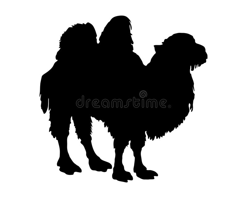 blanc de chameau bactrian illustration stock