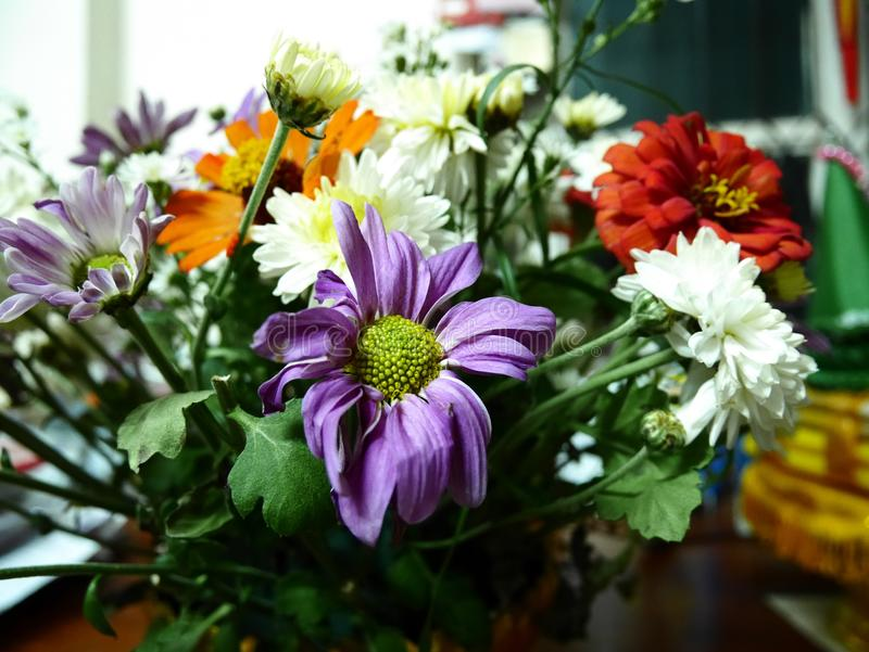 Blanc de fleur image stock