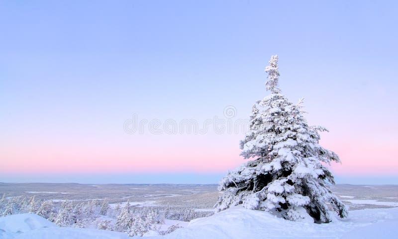 Blanc de neige images stock