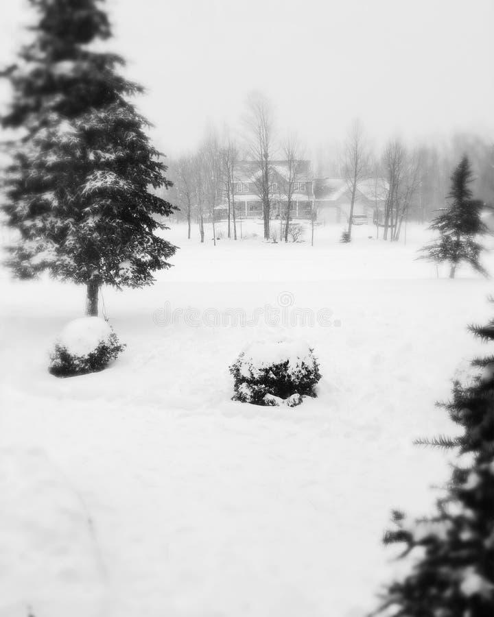 Blanc de neige photos stock
