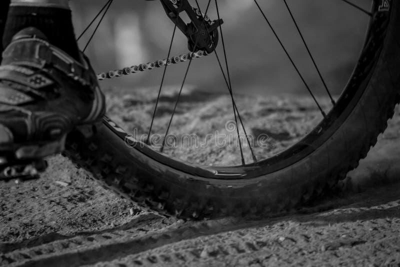 blanc de pneu de montagne d'isolement par vélo photo libre de droits