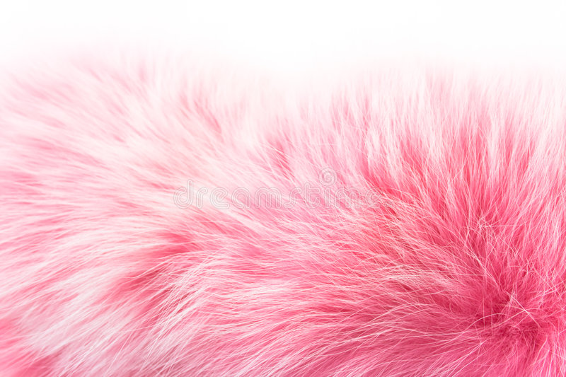 blanc de rose de fourrure photos libres de droits