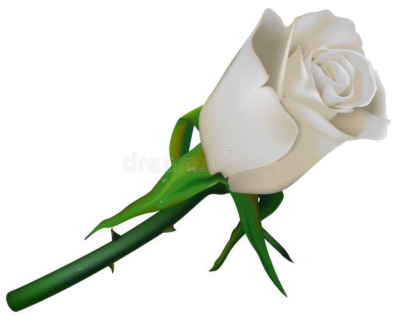 Blanc de Rose de mariage illustration de vecteur