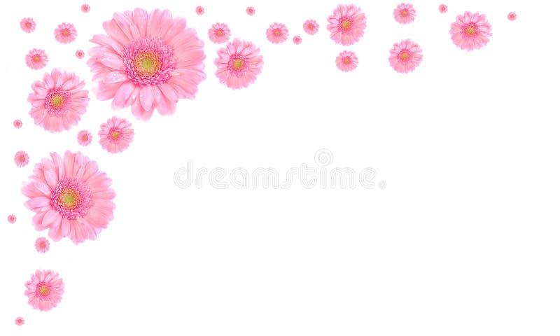 blanc de rose de trame de fleur de fond