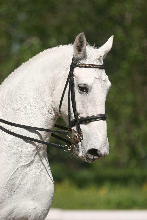 Blanc de verticale de cheval