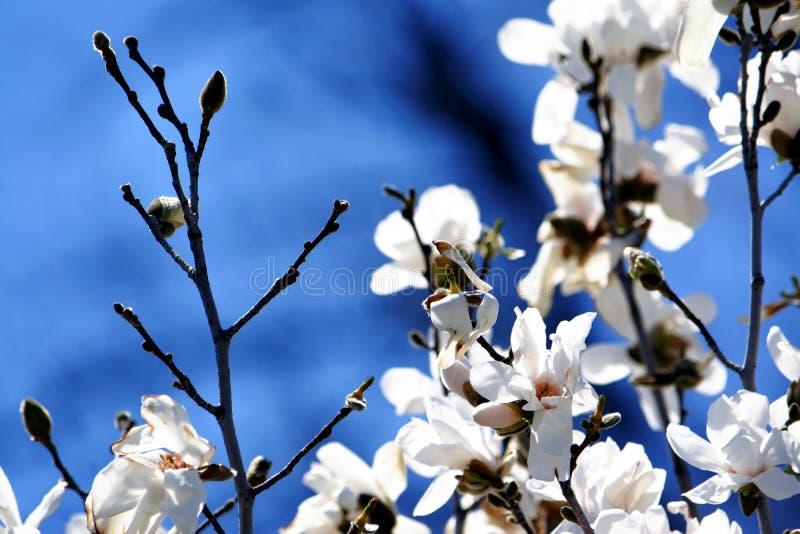 Blanc et bleu photos libres de droits