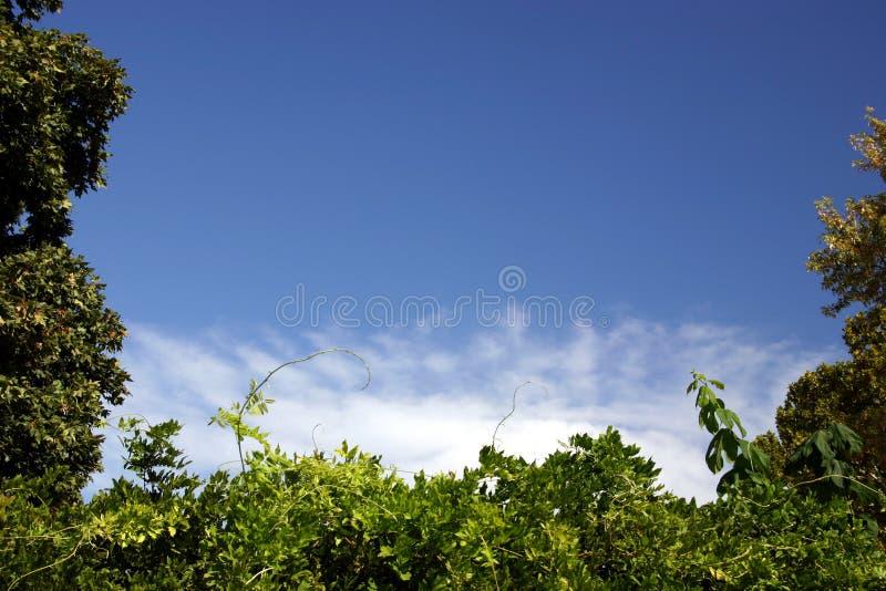 Blanc Et Bleu Verts Photographie stock