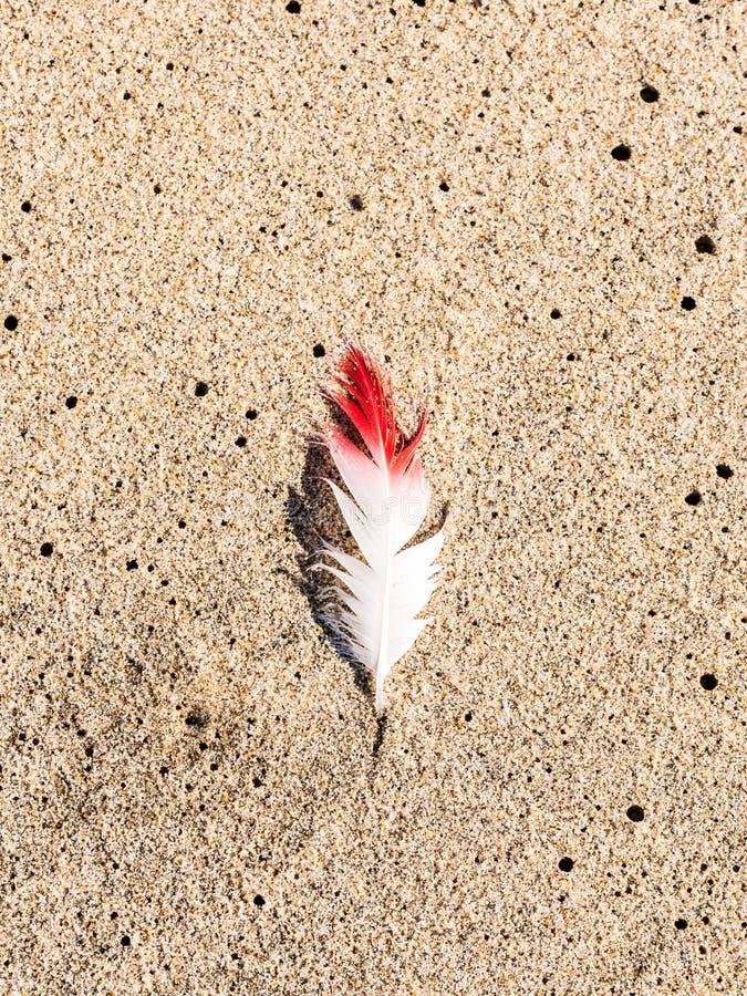 Blanc et plume lue sur une plage dans le port de sandwich, Namibie photographie stock