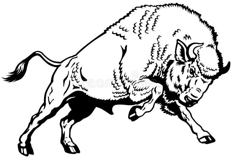 Blanc européen de noir de bison illustration de vecteur