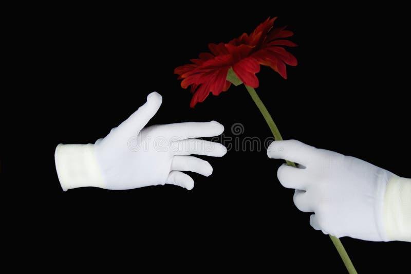 blanc rouge de mains de gants de fleur photo libre de droits