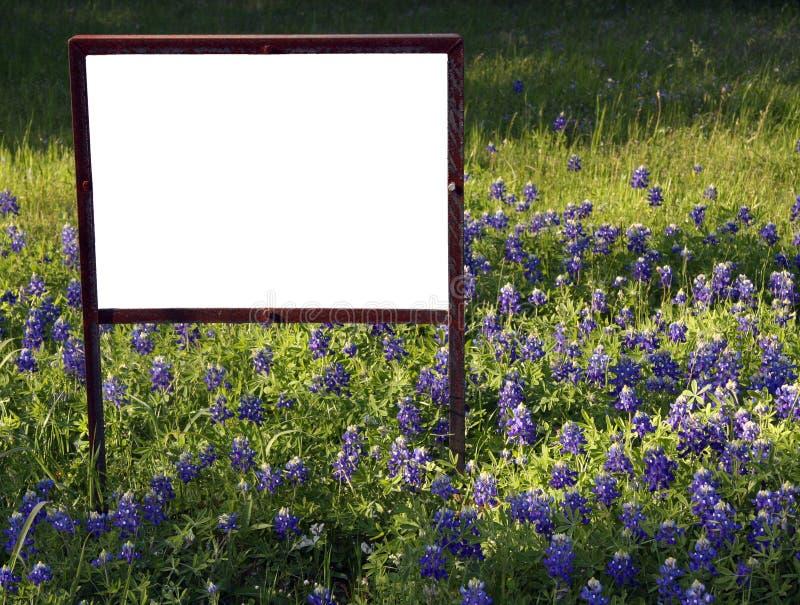 Blanc signez dedans les Bluebonnets image libre de droits