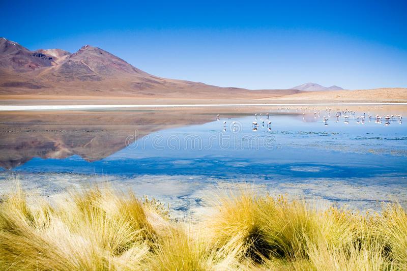BLANCA Βολιβία laguna στοκ φωτογραφία