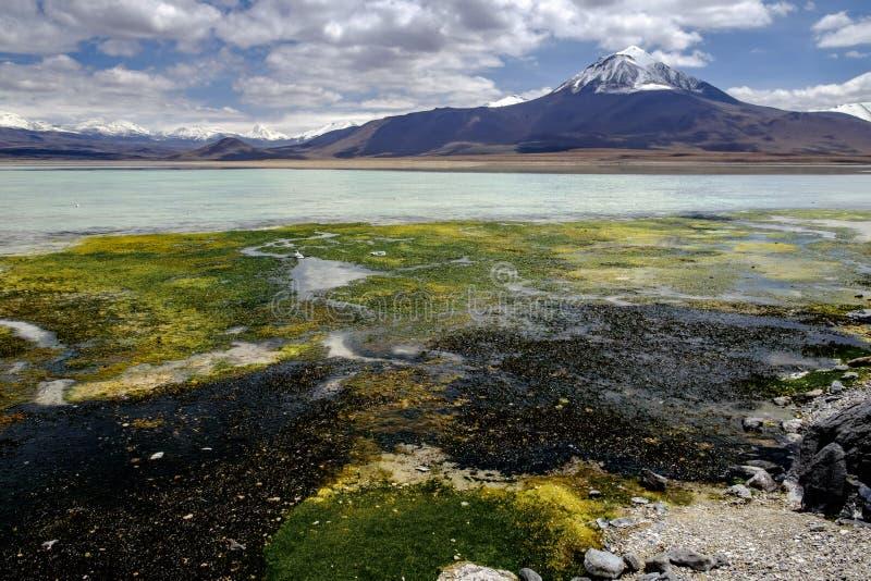 Blanca de Laguna, Bolivia foto de archivo libre de regalías
