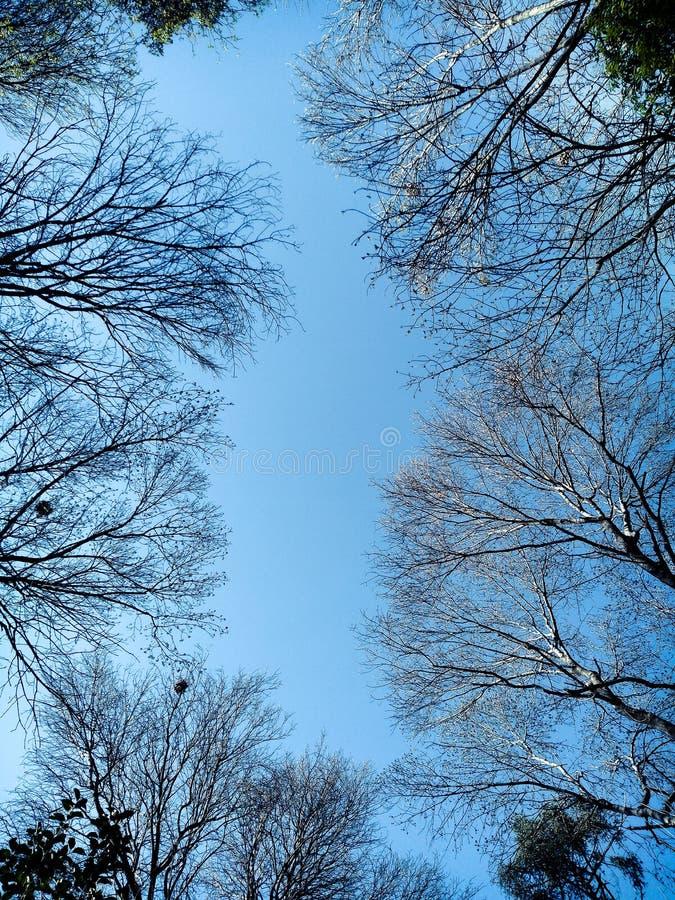 Blanckruimte tussen de naakte spruit van de bomenbodem royalty-vrije stock fotografie