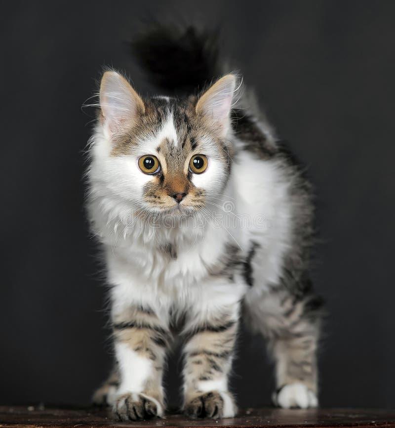 Blanco con el gato rayado de los puntos imagenes de archivo