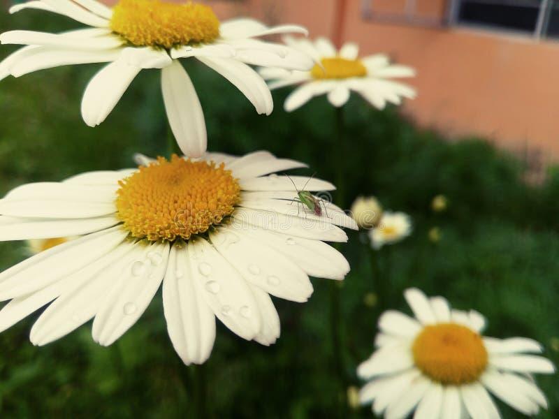 Blanco de la flor fotos de archivo
