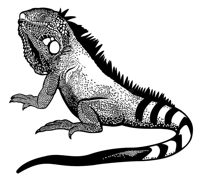 Blanco negro de la iguana ilustración del vector