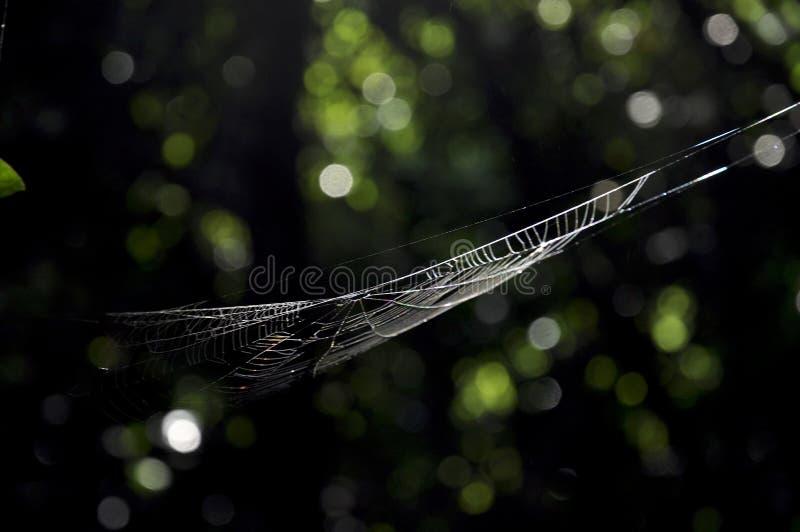 Blanco neto suspendido de la araña de la luz en la selva Seychelles foto de archivo libre de regalías