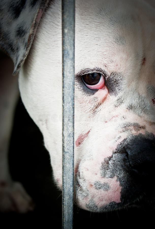 Blanco triste y perro detrás de rejillas imagenes de archivo