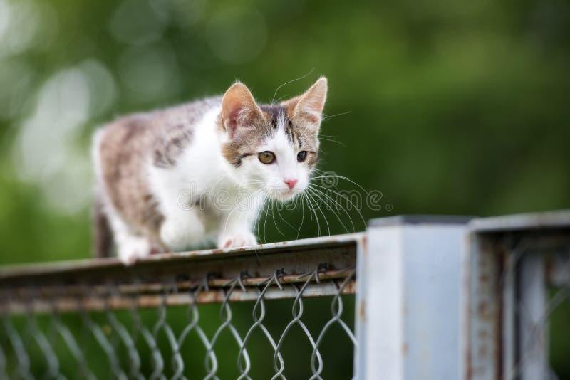 Blanco y gatito perdido del gato atigrado al aire libre imagen de archivo libre de regalías