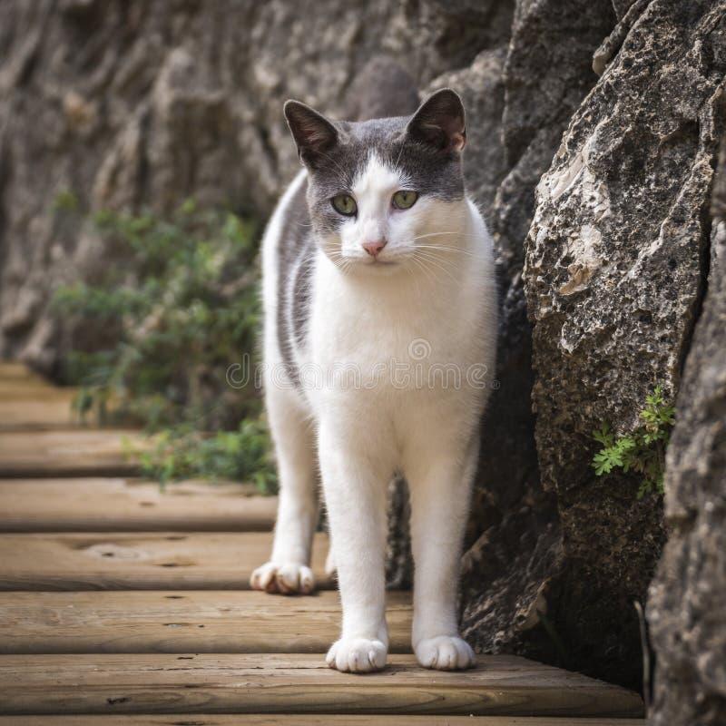 Blanco y Grey Short Fur Cat Beside Grey Rock durante d3ia fotos de archivo