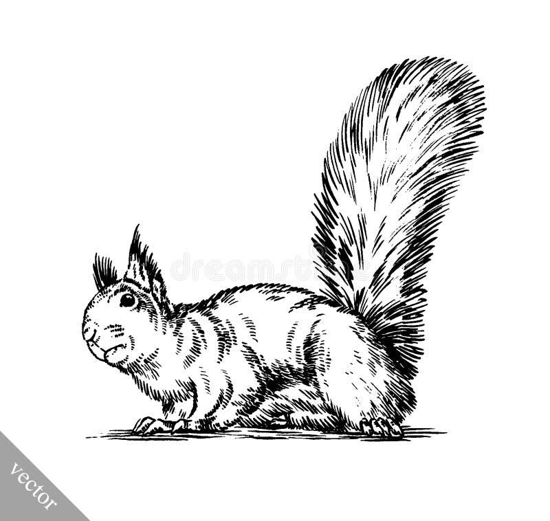 Blanco y negro grabe el ejemplo aislado de la ardilla libre illustration