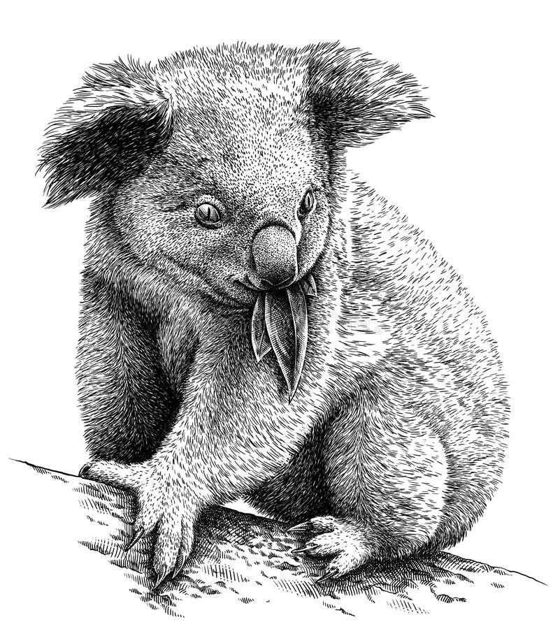 Blanco y negro grabe el ejemplo aislado de la koala libre illustration