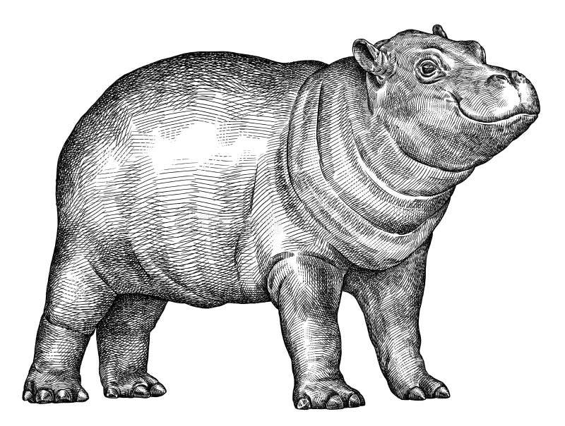 Blanco y negro grabe el ejemplo aislado del hipopótamo libre illustration