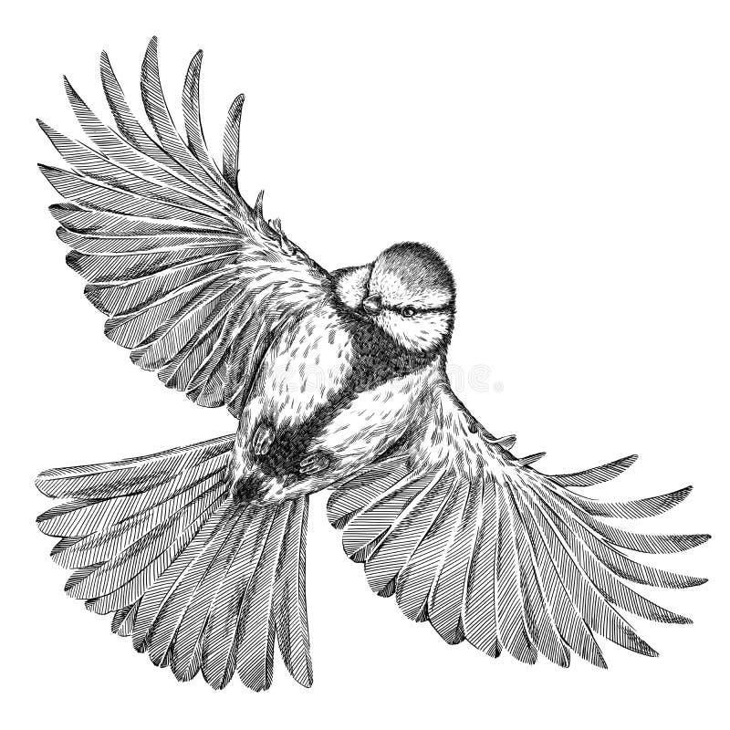 Blanco y negro grabe el ejemplo aislado del tit stock de ilustración