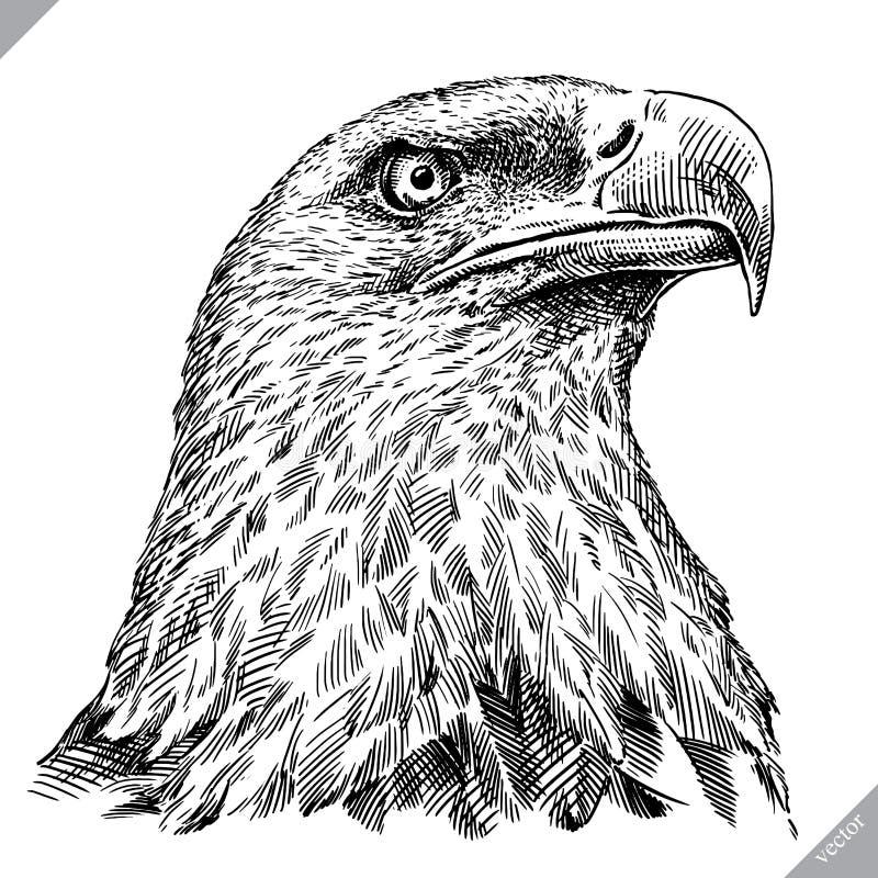 Blanco y negro grabe el ejemplo aislado del vector del águila libre illustration