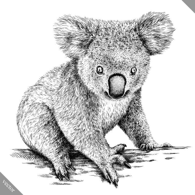 Blanco y negro grabe el ejemplo aislado del vector de la koala ilustración del vector